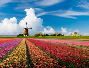 landschap-holland-tulpen
